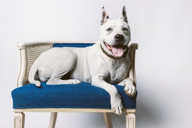 cão longevo