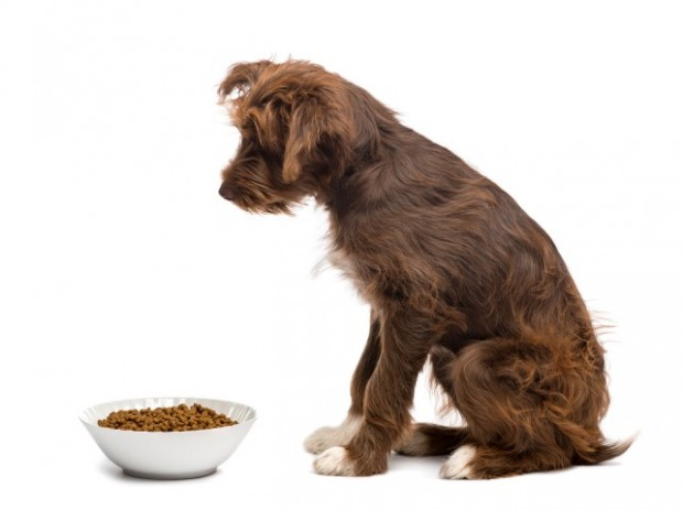 cão sem fome