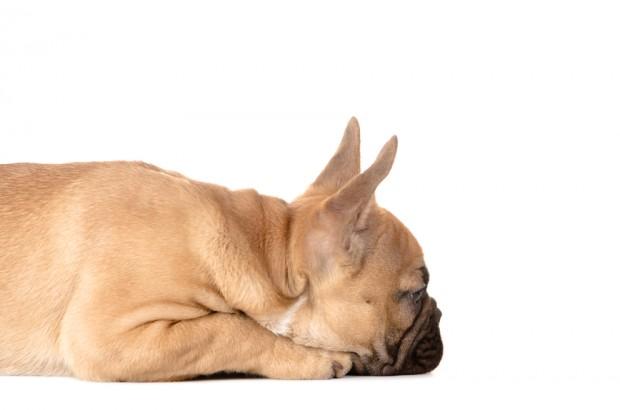 como educar sem bater no cão