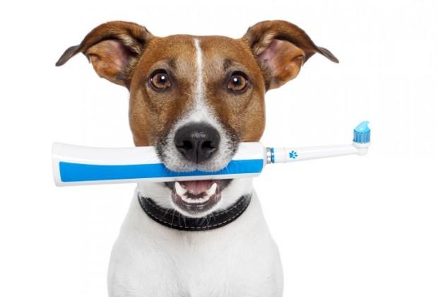 escova de dentes canina