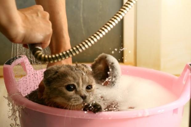 gato na espuma