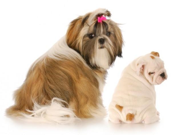glândula anal de cachorros