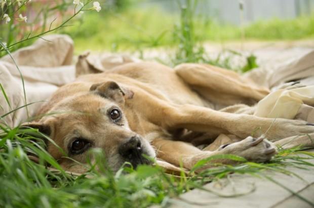tratar câncer canino